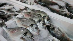 Ucuz balığa yoğun ilgi