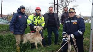 Kuyuya düşen oğlak ve anne keçiyi itfaiye kurtardı