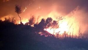 Kaşta yangın 70 dönüm orman ile 4 dönümlük makilik ve zeytinlik yandı