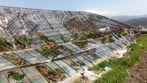 Antalyada şiddetli rüzgar, cam serayı yıktı
