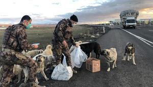 Polisler, yiyeceklerinden sokak köpeklerine verdi