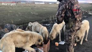 Polisler yiyeceklerini sokak köpekleri ile paylaştı