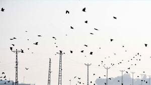 Koronavirüs günlerinde kuşların göçerliğine tanık olun önerisi