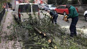 Şişlide şiddetli rüzgarda ağaç otomobilin üzerine devrildi