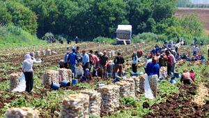Tarım işçileri için ek tedbirler alındı