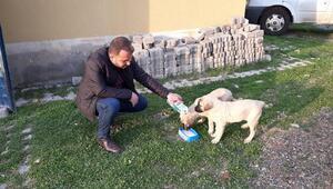 Karakoçanda, sokak hayvanları unutulmadı