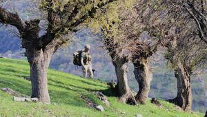 Asker 5 sivili şehit eden teröristlerin peşinde