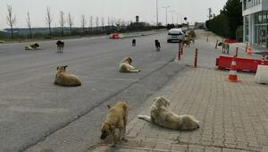 Aç kalan sokak köpekleri için mama bırakıldı