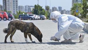 Mersinde, sokak hayvanları unutulmadı