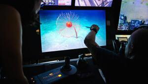 Okyanus dibinde bilinen en uzun hayvan keşfedildi