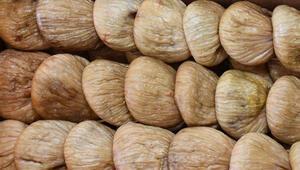 Kuru incir ihracatı artıyor
