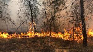Bursada ormanlık alanda çıkan yangın kısa sürede söndürüldü