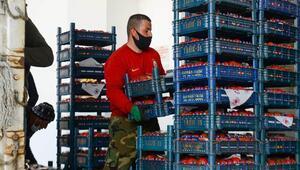 23 kamyon ve 1 TIR sebze-meyve satın alındı