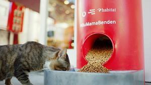 Evde kaldığımız bugünlerde sokak hayvanları #BuMamaBenden ile doyuyor