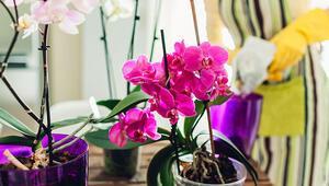 Evde orkide bakımının püf noktaları