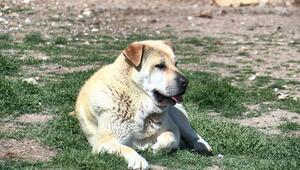 Bir ayda yaklaşık 100 köpek topladık