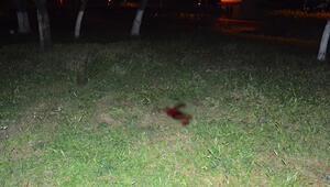İzmirde korkunç cinayet Başını taşla ezdi