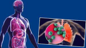 Bilim adamları her gün yeni bir bilgiye ulaşıyor... Koronavirüs vücudumuzu ele geçiriyor