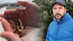 Prof. Dr. Sevgili uyardı: Daha önce görmediğimiz böcek türlerine rastlayacağız