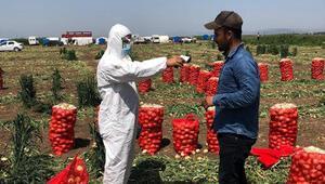 Mevsimlik işçilere koronavirüse karşı tarlada sağlık taraması