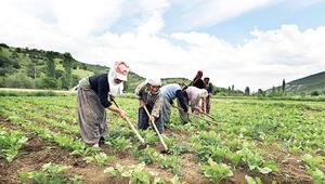 Çiftçiye sanal pazar