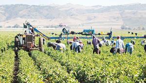 Bilim Kurulu mevsimsel tarım işçileri için karar aldı: İşçi Çadırları arasına virüs mesafesi