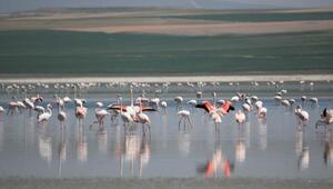 180 kuş türüne ev sahipliği yapan Düden Gölü kurumaya yüz tuttu