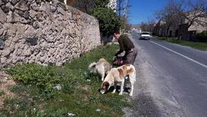 Niğdede sokak hayvanları için besleme çalışmaları sürüyor
