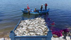 İznik Gölünde gümüş balığı bolluğu