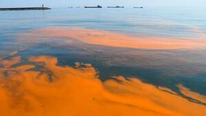 Marmara Denizinde plankton çoğalması