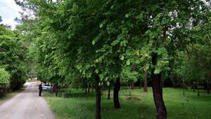 Kesin korunacak hassas alan ilan edildi: Sığla Ormanları