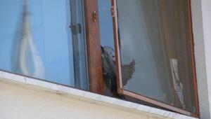 Pencere ile sineklik arasına sıkışan güvercin için seferber oldular