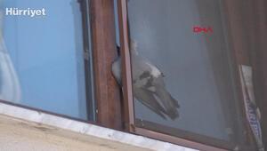 Pencereye sıkışan güvercini itfaiye kurtardı