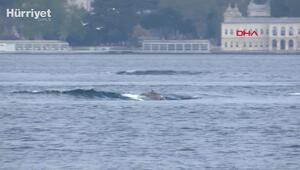 Yunusların dalgalarla dansı Üsküdardan görüntülendi