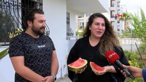 Antalyada aşeren hamile kadına Validen karpuz izni