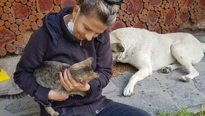 Kozanlı hayvanseverler sokak köpeklerini besledi