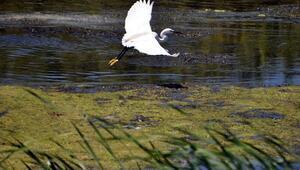 UNESCO Dünya Mirası Daimi Listesine aday deltada, 359 kuş türü yaşıyor
