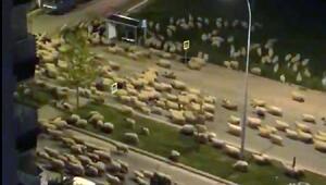 Samsunda şaşırtan görüntü Koyun sürüsü caddeyi kapattı