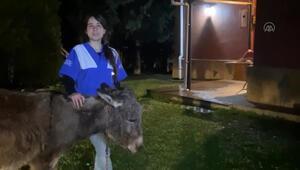 Ankarada yavrusuna köpeklerin saldırtıldığı eşek kurtarıldı