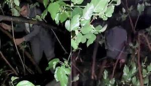Kumar baskınında yakalanmamak için ağaca çıktı