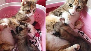 Yavru köpeği emziren anne kediden gülümseten görüntüler