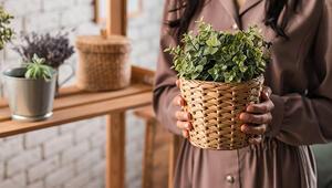Ev Dekorasyonunda Bitkilerin Önemi ve Yerleşimi