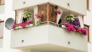 Pencereler, balkonlar ve teraslar çiçek açacak