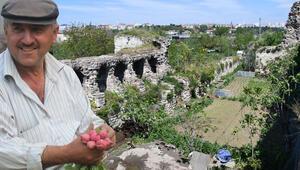 Yedikule Bostanları için yıllarca uğraştı Mirası '2 milyon ceza' oldu…