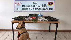 Geliboluda uyuşturucu operasyonu: 2 gözaltı