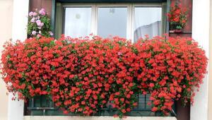 Balkonlar ve pencere önleri çiçek bahçesine dönsün…