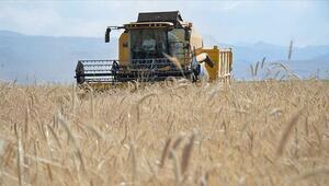 Buğdayda alım fiyatı açıklandı