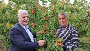 Tokdemir: Meyvecilik desteklenmeli