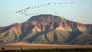 Göçmen kuşlar tehdit altında