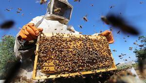 Arılar kışı çıkaramıyor